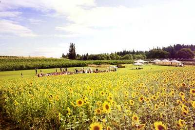 sunflower garden wedding portland oregon view